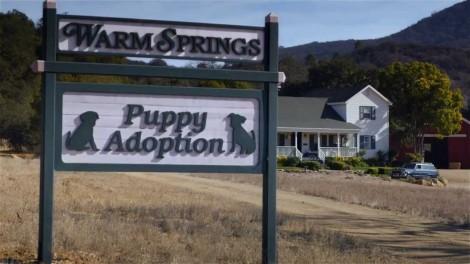 "Budweiser Super Bowl XLVIII Commercial -- ""Puppy Love"""